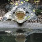 Photo 15 : Crocodile in Washington zoo
