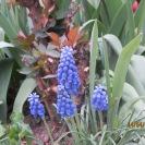 Photo 150 : Spring flowers