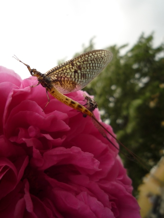 Photo 2 : Butterfly on a rose